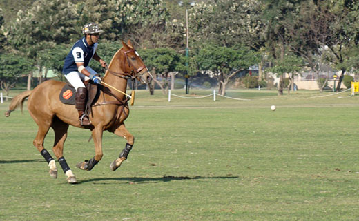 India's 1st official Polo League announced; to be scheduled from March 2017