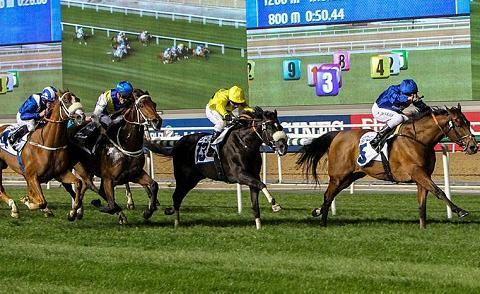 Bengaluru racing horses 'fail' dope test, police register FIR